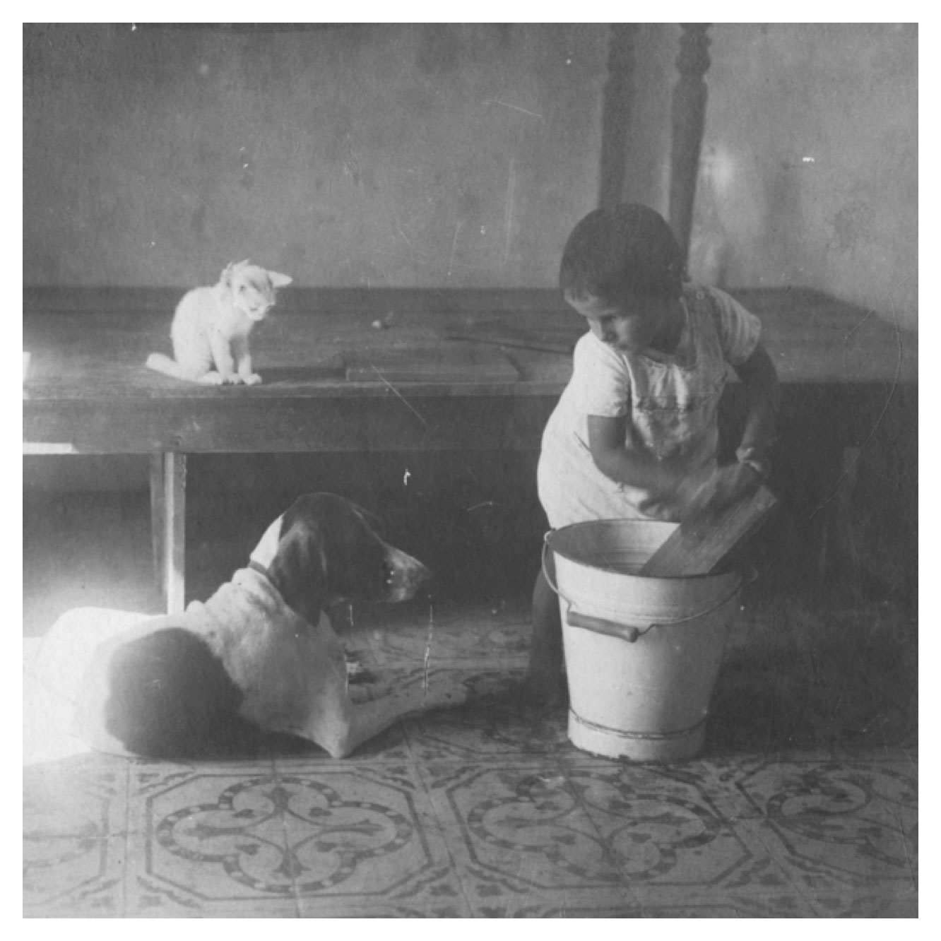 photo of child and a cat and a dog