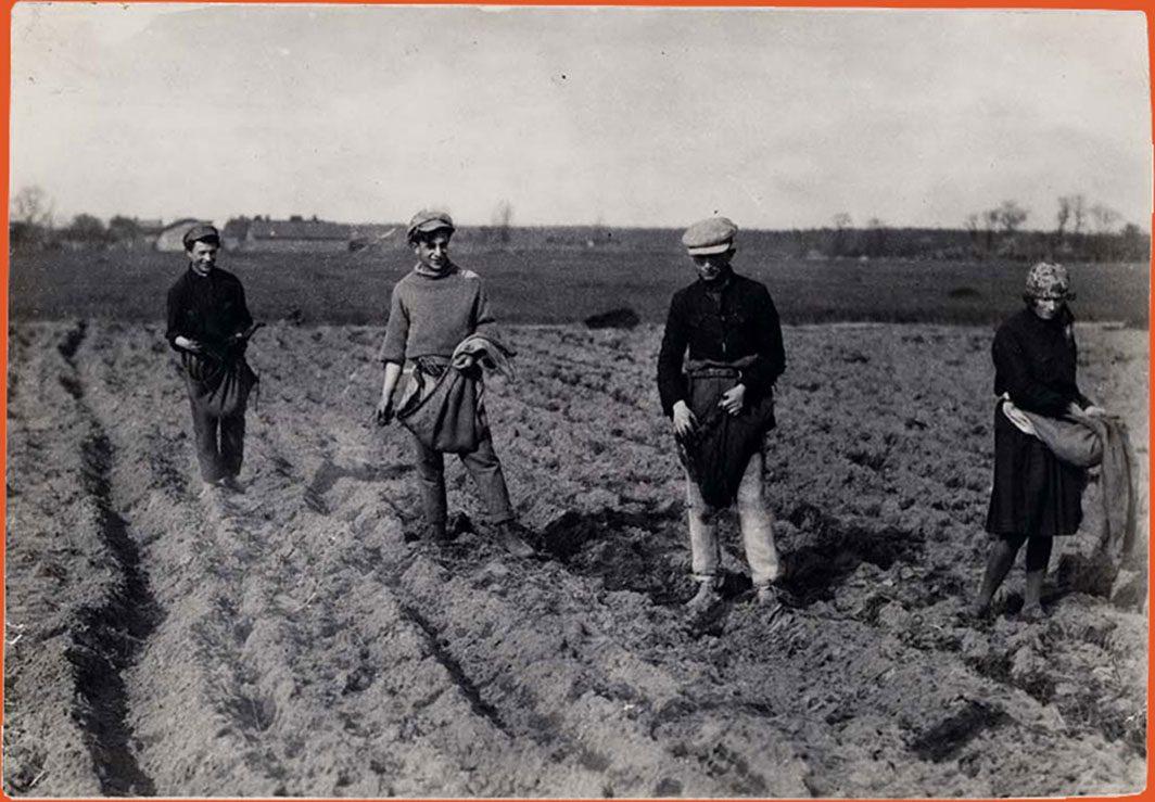 Farming a field for potatoes